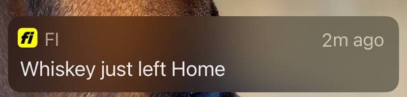 Fi app notification that dog left home
