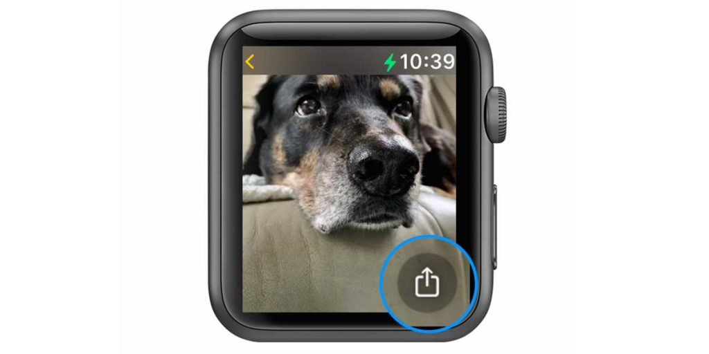 apple watch share button in Photos app